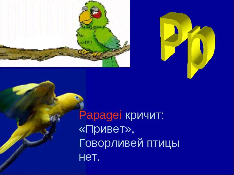 Papagei кричит: «Привет», Говорливей птицы нет.