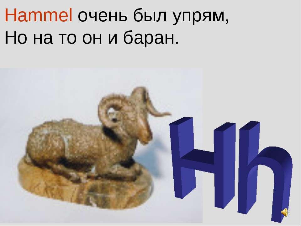Hammel очень был упрям, Но на то он и баран.