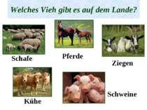 Welches Vieh gibt es auf dem Lande? Schafe Pferde Ziegen Kühe Schweine