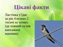 Цікаві факти Ластівка з'їдає за рік близько 2 тисячі кг комах (це повний кузо...