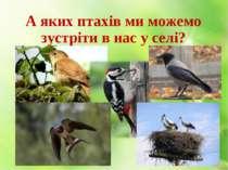 А яких птахів ми можемо зустріти в нас у селі?