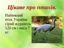 Цікаве про птахів. Найвищий птах України сірий журавель 120 см і маса 7 кг.