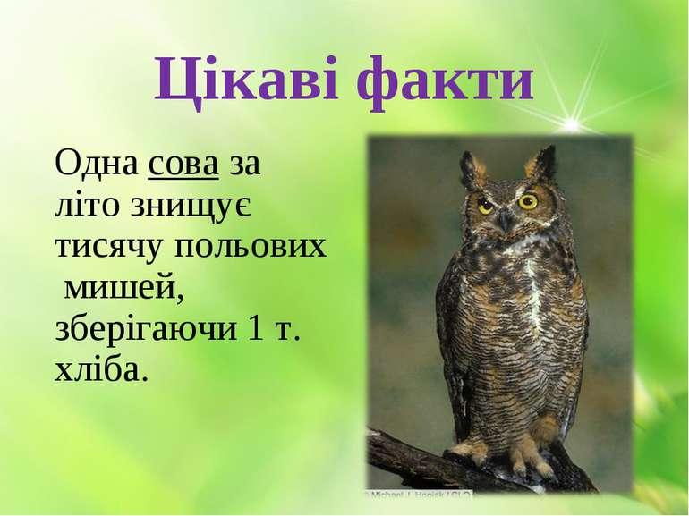Цікаві факти Одна сова за літо знищує тисячу польових мишей, зберігаючи 1 т. ...