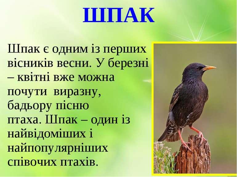 ШПАК Шпак є одним із перших вісників весни. У березні – квітні вже можна почу...