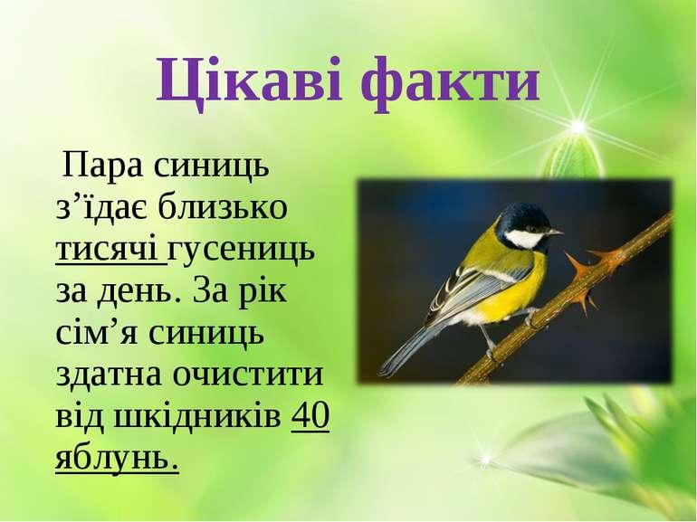 Цікаві факти Пара синиць з'їдає близько тисячі гусениць за день. За рік сім'я...