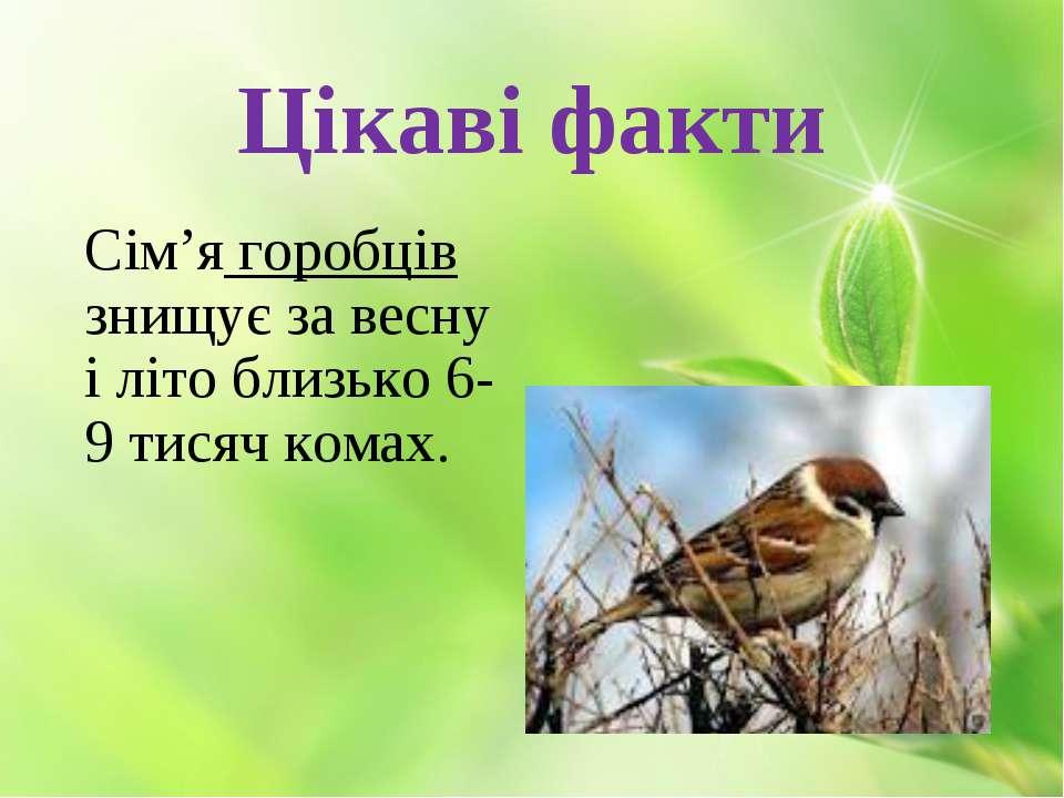 Цікаві факти Сім'я горобців знищує за весну і літо близько 6-9 тисяч комах.