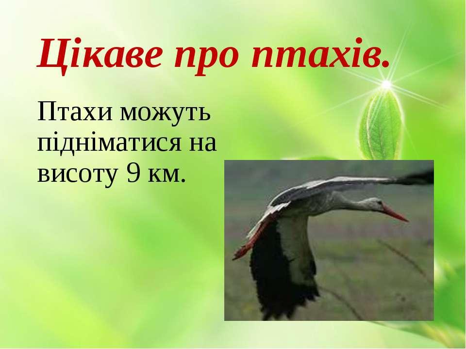 Цікаве про птахів. Птахи можуть підніматися на висоту 9 км.