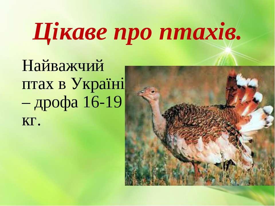 Цікаве про птахів. Найважчий птах в Україні – дрофа 16-19 кг.