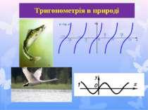 Тригонометрія в природі