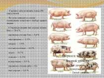 У країнах світу розводять понад 200 порід свиней. Всі вони виведені на основі...