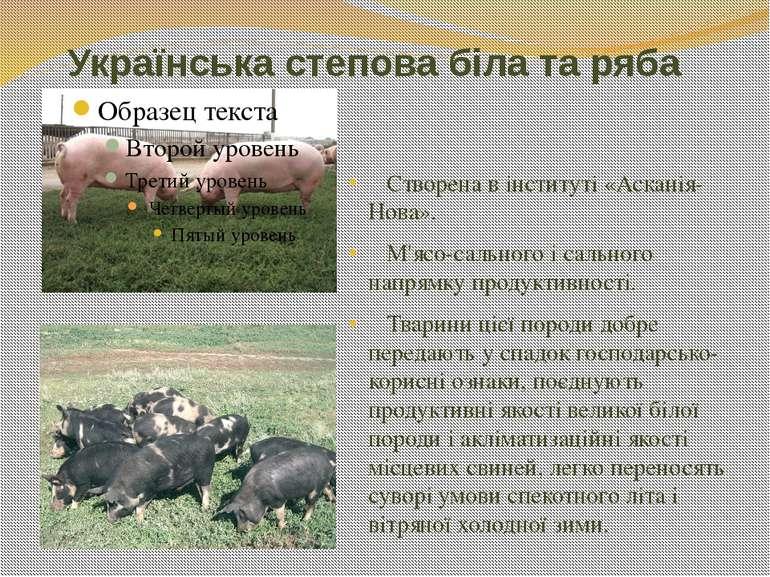 Українська степова біла та ряба Створена в інституті «Асканія-Нова». М'ясо-са...