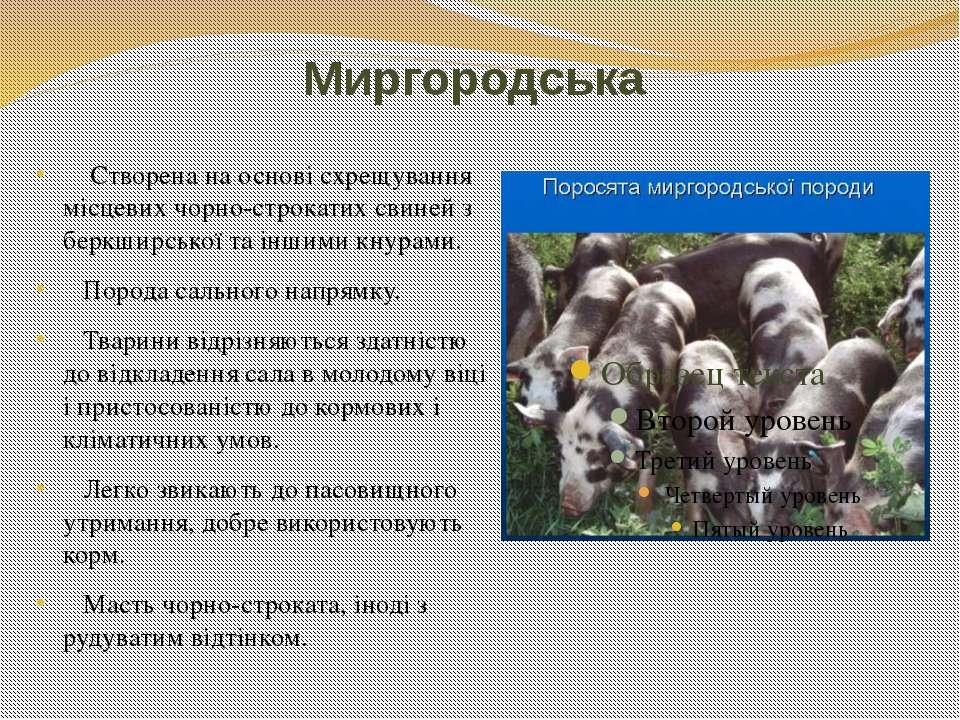 Миргородська Створена на основі схрещування місцевих чорно-строкатих свиней з...