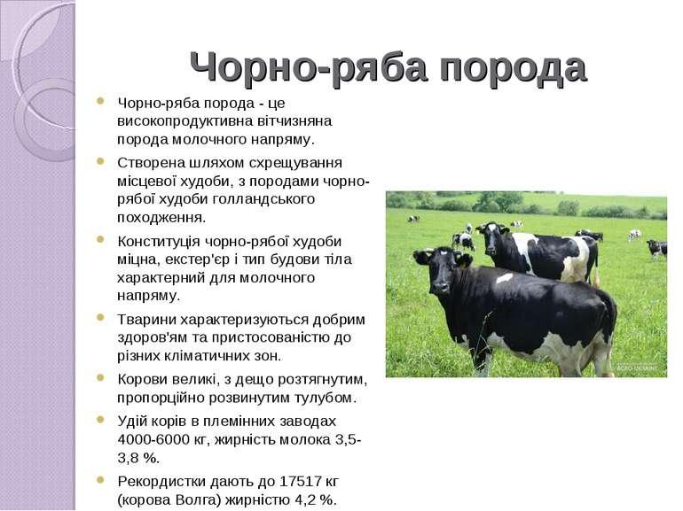Чорно-ряба порода Чорно-ряба порода- це високопродуктивна вітчизняна порода ...