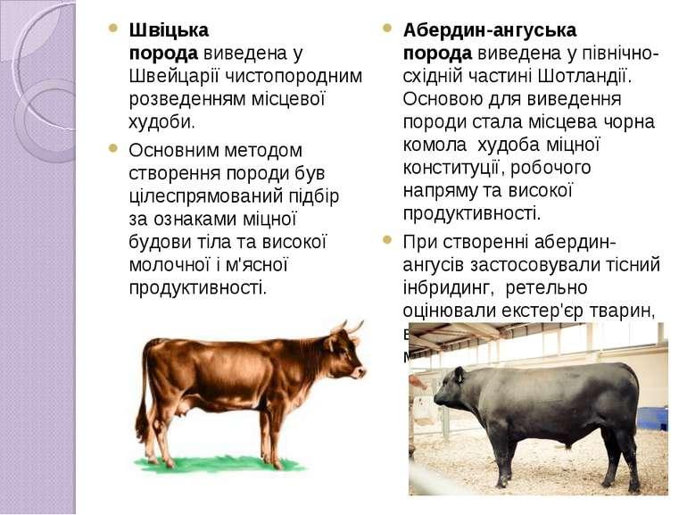 Швіцька породавиведена у Швейцарії чистопородним розведенням місцевої худоби...