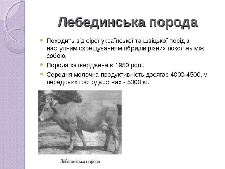 Лебединська порода Походить від сірої української та швіцької порід з наступн...