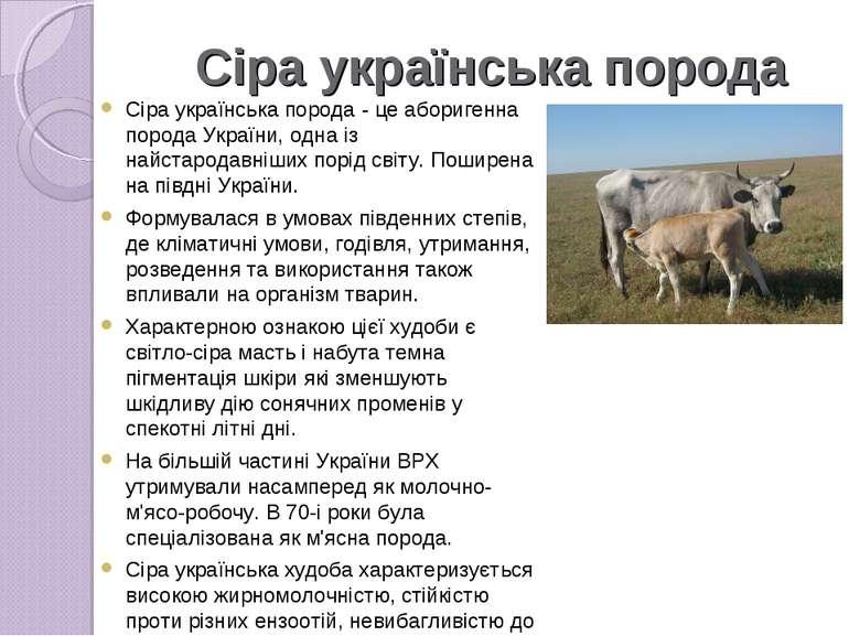 Сіра українська порода Сіра українська порода- це аборигенна порода України,...