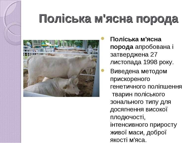 Поліська м'ясна порода Поліська м'ясна порода апробована і затверджена 27 лис...
