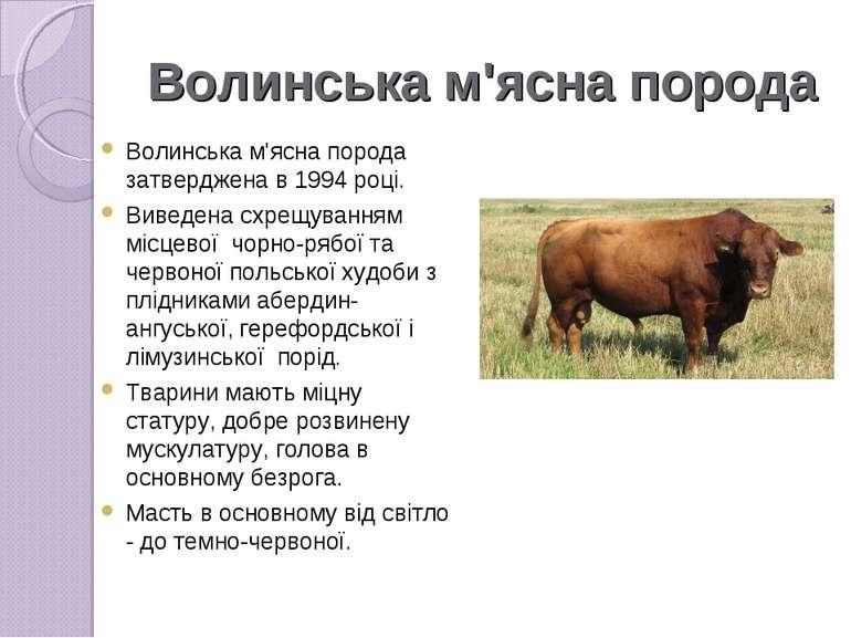 Волинська м'ясна порода Волинська м'ясна порода затверджена в 1994 році. Виве...
