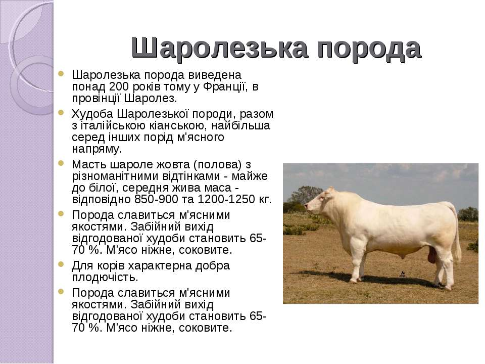 Шаролезька порода Шаролезька породавиведена понад 200 років тому у Франції, ...