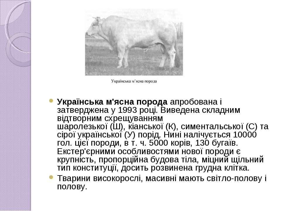 Українська м'ясна породаапробована і затверджена у 1993 році. Виведена склад...