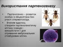 Використання партеногенезу Партеногенез – розвиток особин із яйцеклітини без ...