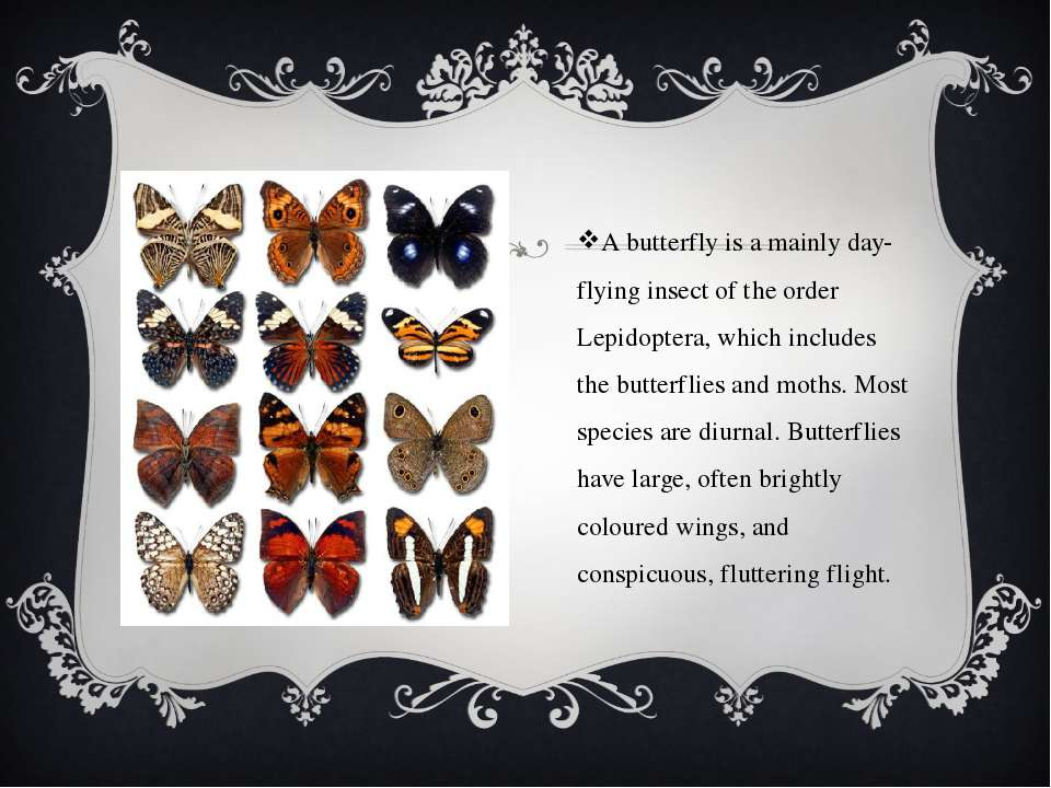 A butterfly is a mainly day-flying insect of the order Lepidoptera, which inc...