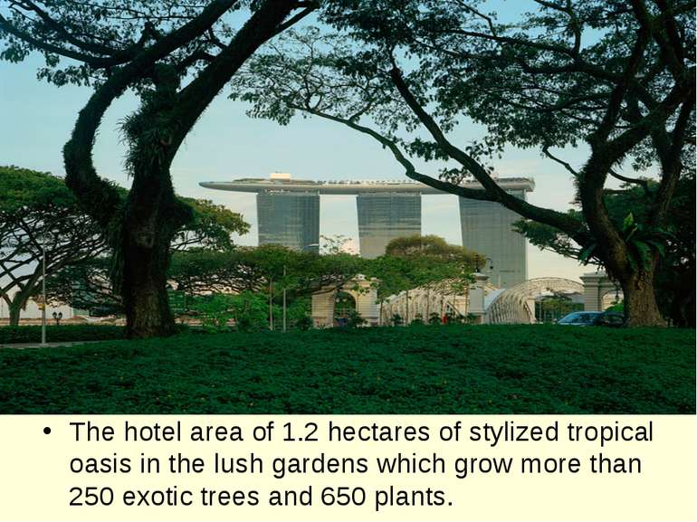 The hotel area of 1.2 hectares of stylized tropical oasis in the lush gardens...