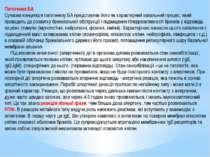 Патогенез БА Сучасна концепція патогенезу БА представляє його як характерний ...