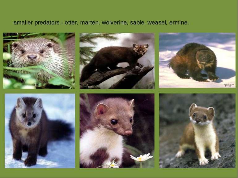 smaller predators - otter, marten, wolverine, sable, weasel, ermine.