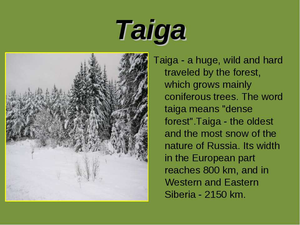 Taiga Taiga - a huge, wild and hard traveled by the forest, which grows mainl...
