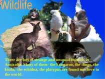 There are lots of strange and unusual animals in Australia. Many of them- the...