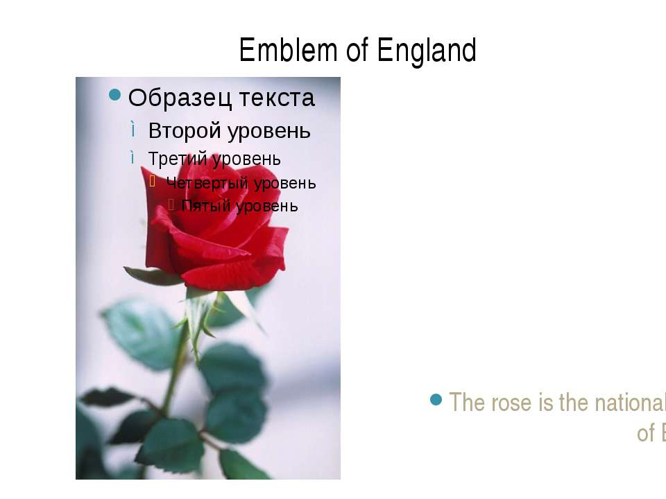 The rose is the national emblem of England. Emblem of England