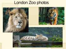 London Zoo photos