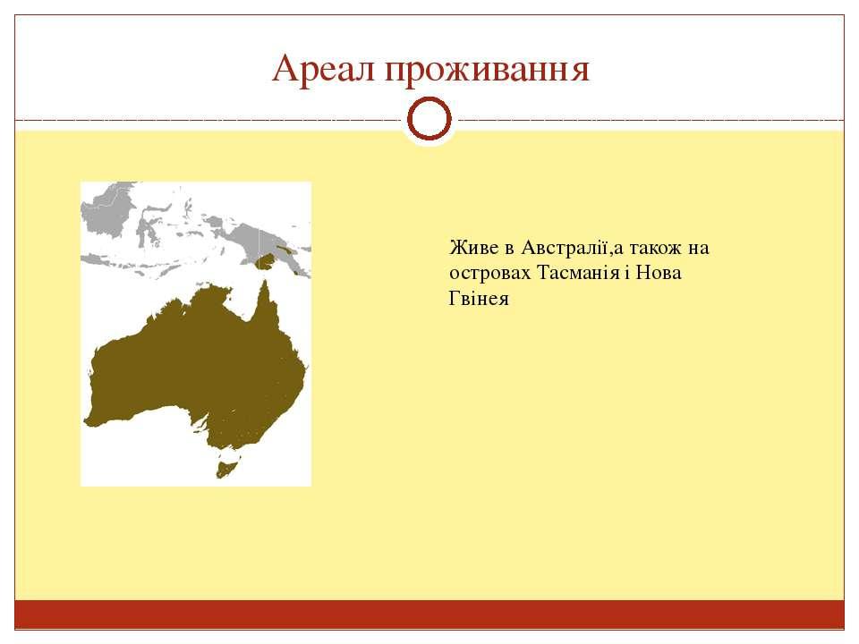 Ареал проживання Живе в Австралії,а також на островах Тасманія і Нова Гвінея