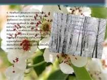 4. Наявний механізм сплати такс (плата за дерево на пні, яке підлягає зрубанн...
