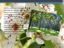 Проблема полягає в тому, що лісове господарство і сьогодні існує в рамках ста...