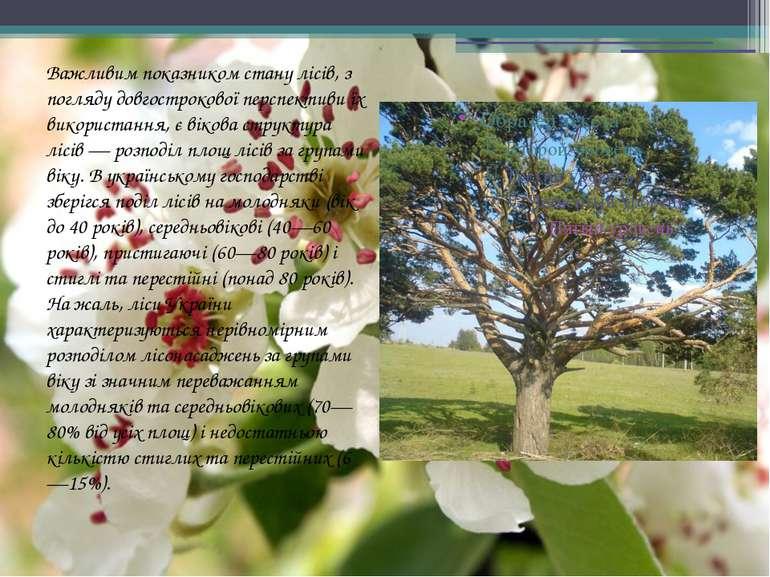 Важливим показником стану лісів, з погляду довгострокової перспективи їх вико...
