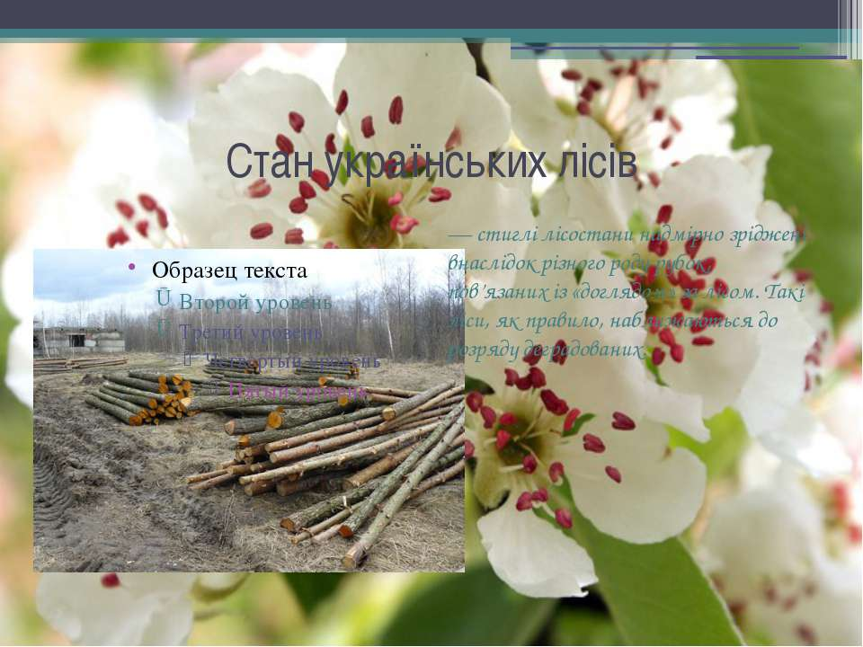 — стиглі лісостани надмірно зріджені внаслідок різного роду рубок, пов'язаних...