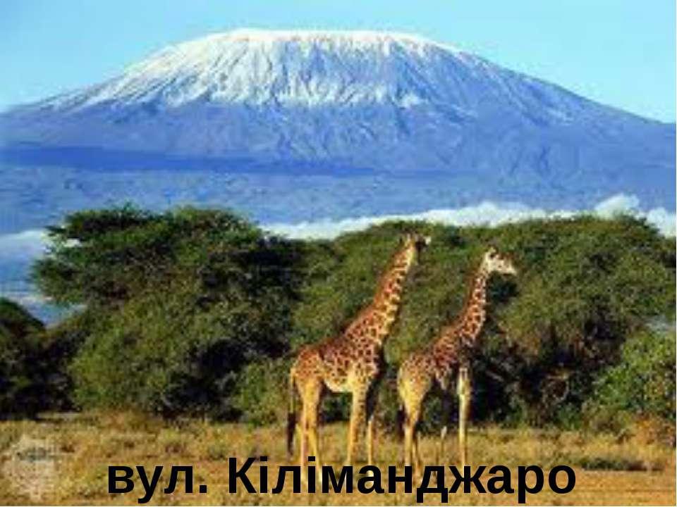вул. Кіліманджаро