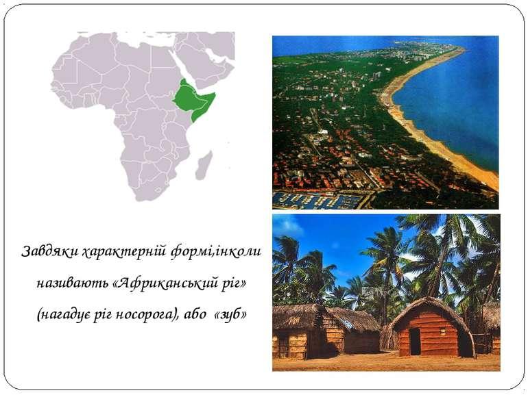 Завдяки характерній формі,інколи називають «Африканський ріг» (нагадує ріг но...