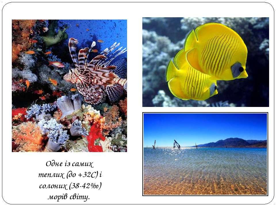 Одне із самих теплих (до +32С) і солоних (38-42‰) морів світу.