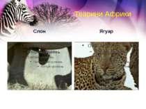 Тварини Африки Слон Ягуар