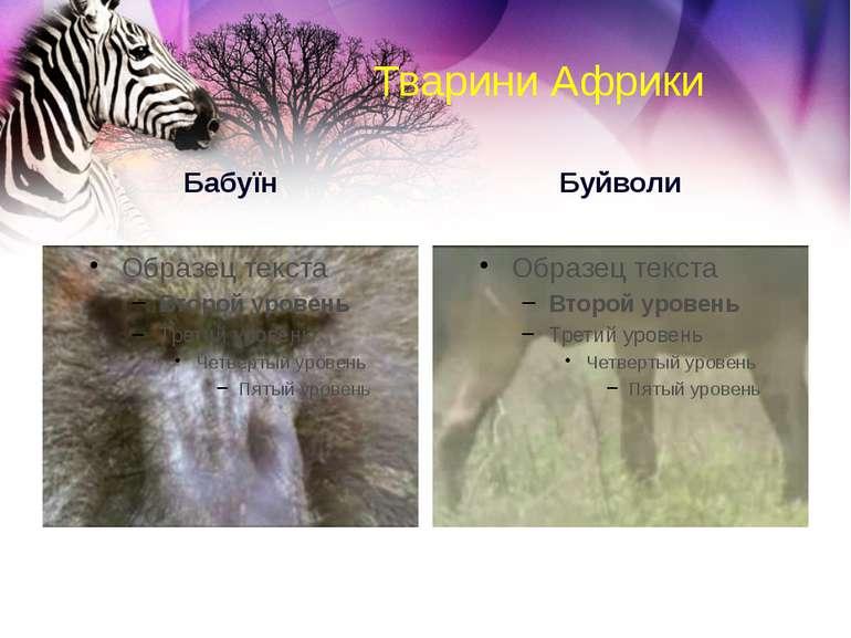 Тварини Африки Бабуїн Буйволи