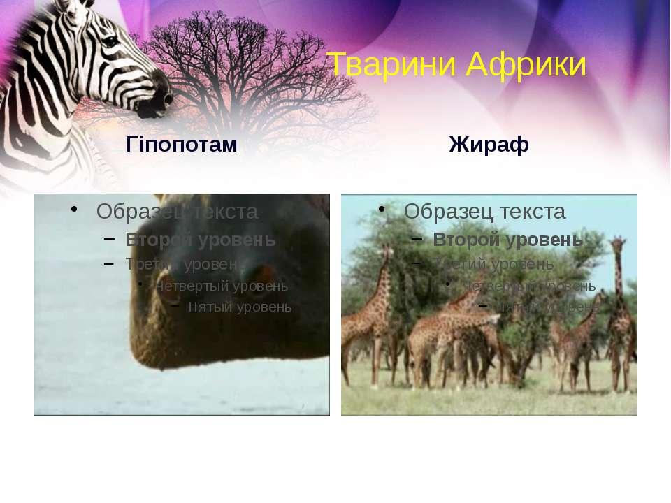 Тварини Африки Гіпопотам Жираф
