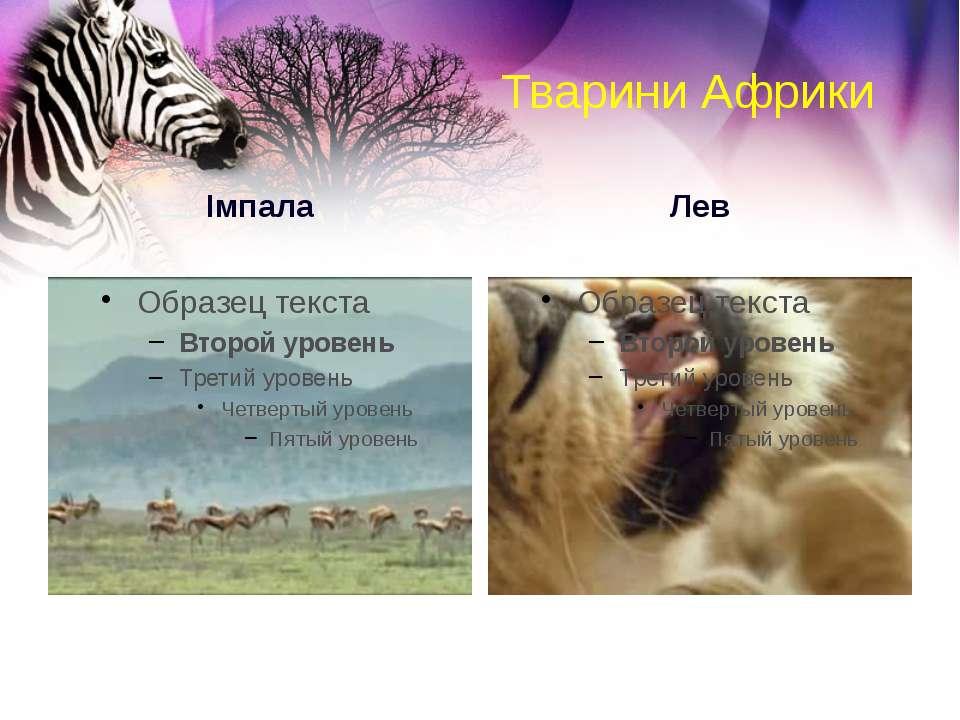 Тварини Африки Імпала Лев