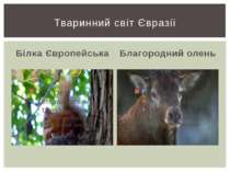 Білка Європейська Благородний олень Тваринний світ Євразії