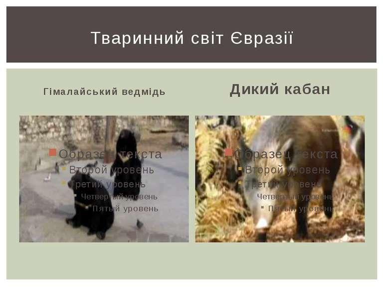 Гімалайський ведмідь Дикий кабан Тваринний світ Євразії