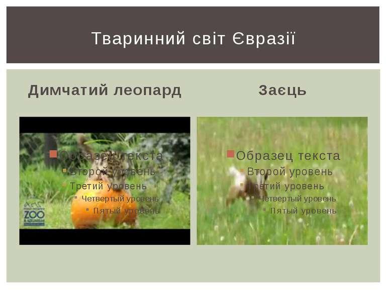 Димчатий леопард Заєць Тваринний світ Євразії