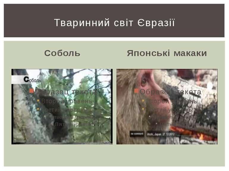 Соболь Японські макаки Тваринний світ Євразії