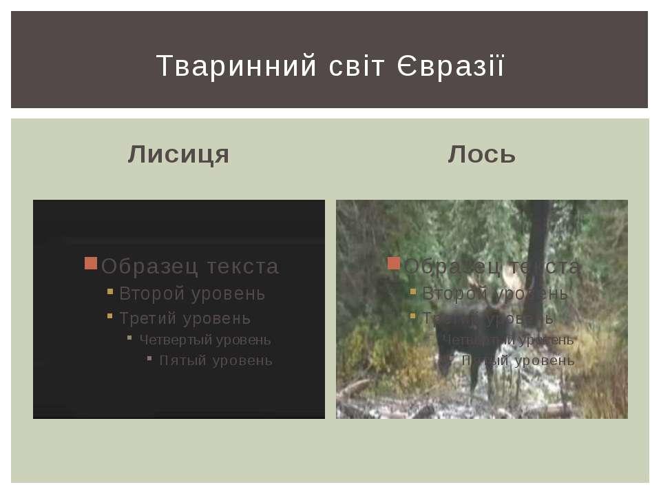 Лисиця Лось Тваринний світ Євразії
